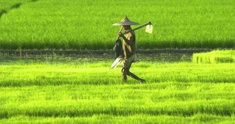 นิตยสาร เกษตร